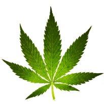 Medizinisches Cannabis - Öl - hier verfügbar